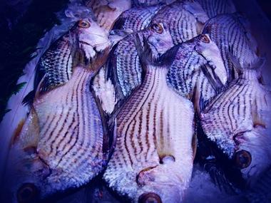lomographic-fish.jpg
